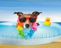 Dog at the beach and ocean with air mattress