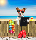 Dog on beach on summer vacation holidays Royalty Free Stock Photo