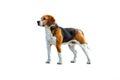 Dog beagle on a white