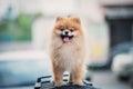 A dog Royalty Free Stock Photo