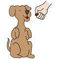Dog begging treat an image of a Stock Image