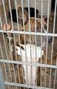 Dog behind bars Royalty Free Stock Photo