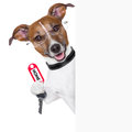 Dog behind an empty placard with a home key Stock Photos