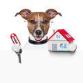 Dog behind an empty placard with a small house and home keys Stock Photography