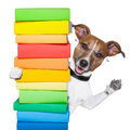Dog behind tall stack books Royalty Free Stock Photography