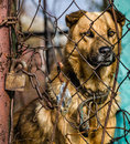 Dog behind a wire fence Royalty Free Stock Photography
