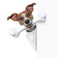 Dog with big bone a white and a white banner Royalty Free Stock Image