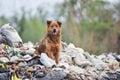 Dog on big garbage heap Royalty Free Stock Photo
