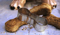 Dog biscuits and cutter Royalty Free Stock Photo