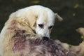 Dog bites back Royalty Free Stock Photo