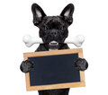 Dog with bone Royalty Free Stock Photo