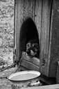 Dog in the booth black and white photo Royalty Free Stock Images