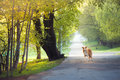 Dog border collie walking spring park Stock Image