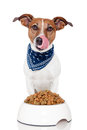 Dog with bowl Stock Photography