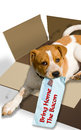Dog in a box with label brown and white mongrel cardboard red text bring home the bacon Stock Photography