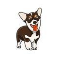 Dog breed Corgi