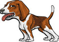 Dog Breeds: Beagle Hound Royalty Free Stock Photography