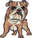 Dog Breeds: BullDog Stock Photos