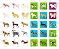 Dog breeds cartoon,flat icons in set collection for design.Dog pet vector symbol stock web illustration.