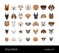 Dog breeds, muzzle set. Collection with hand drawn colorful realistic illustration.