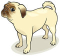 Dog breeds: Pug Royalty Free Stock Images