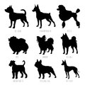 Dog breeds silhouettes set. High detailed, smooth vector illustration