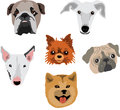Dog breeds six of dogs illustration Royalty Free Stock Photography