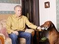 Dog bringing newspaper Royalty Free Stock Photos