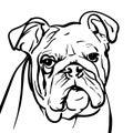 Dog Bulldog. Outlines Illustra...