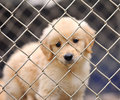 Dog in cage Royalty Free Stock Photography