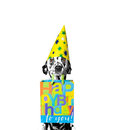 Dog came to someone's birthday Royalty Free Stock Photo