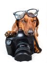Dog with camera getting ready to take a picture Royalty Free Stock Image
