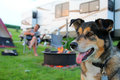 Dog at Campground in Front of Man Playing Guitar Royalty Free Stock Photo