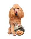 Dog with canned isolated on white Stock Photography
