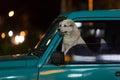 Pes v auto
