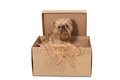 Dog in Cardboard Box Royalty Free Stock Image