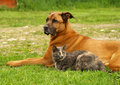 Dog with cat Royalty Free Stock Image