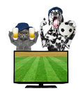 Dog and cat with ball and beer fan football championship Royalty Free Stock Photo