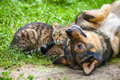 Dog and cat are best friends playing together outdoor lying on the back together Stock Photos