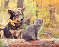 Dog and cat are the best friends sitting together outdoors in autumn forest Stock Photo