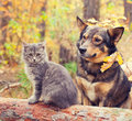 Dog and cat are best friends sitting together outdoors in autumn forest Royalty Free Stock Photography