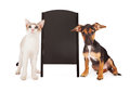 Dog and cat with chalkboard sandwich sign a young puppy a kitten standing on the sides of a blank clean black a frame add your own Royalty Free Stock Photography
