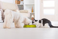 Dog and cat eating food from a bowl Royalty Free Stock Photo