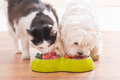 Dog and cat eating natural food from a bowl Royalty Free Stock Photo