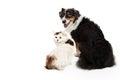 Dog and Cat Facing Forward Looking Back Royalty Free Stock Photo