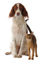 Dog and cat isolated studio Stock Photography