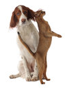 Dog and cat isolated studio Royalty Free Stock Image