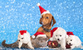 Dog and cat kitens wearing a santa hat Stock Photo