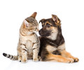 Dog and cat looking at each other. isolated on white background Royalty Free Stock Photo