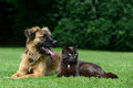 Dog and cat lying on meadow Royalty Free Stock Image